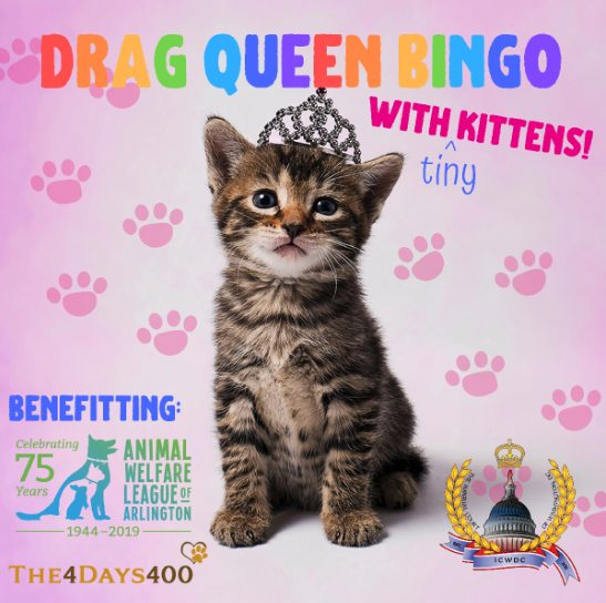 Arlington Drafthouse To Host Sold Out Drag And Kitten Bingo Night