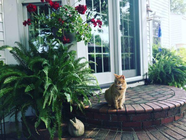 Arlington Pet of the Week: Franco