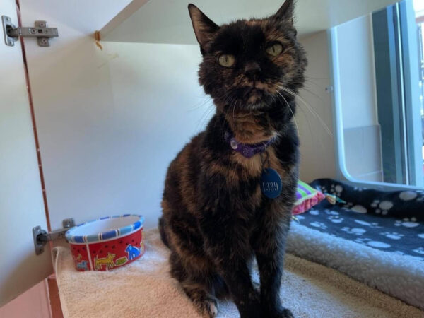 A 22-Year-Old Cat Is in Need of a New Home